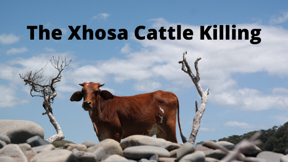 Read more about the article The Xhosa Cattle Killing